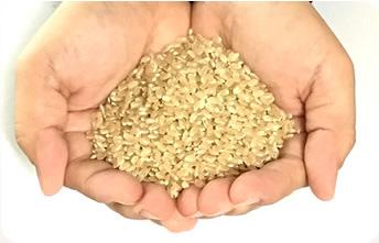 玄米・分づき米